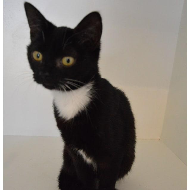 Photo of Nikki ~Rainbow Cat Rescue~