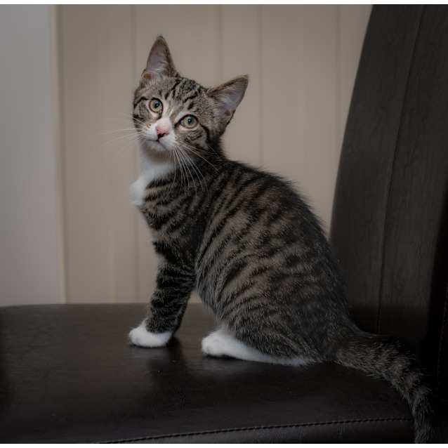 Photo of Newton**On Trial With My New Family**