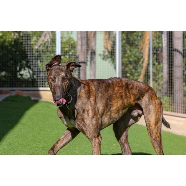 Photo of Frankie (Adoption Pending)