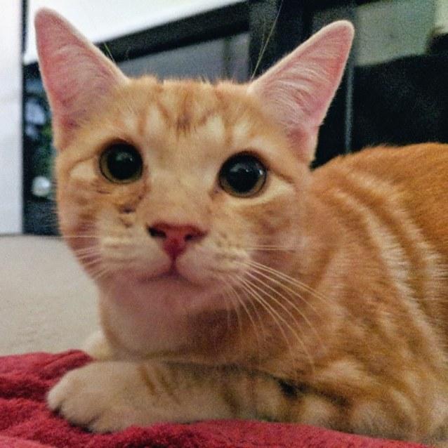 Photo of Elton