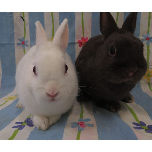 Photo of Pablo & Poppy (Vib)
