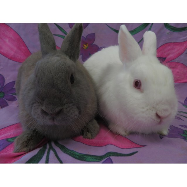 Photo of Binky & Buddy