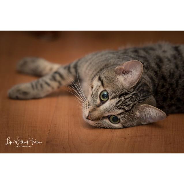 Photo of Tina * Adoption Pending, No Call Please*