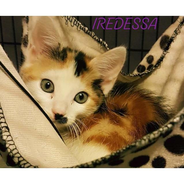 Photo of Iridessa