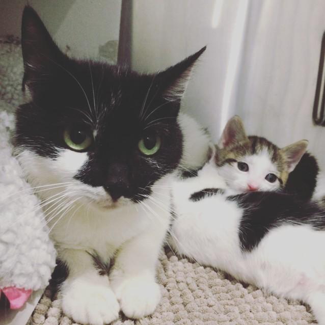 Photo of Tiffa Aka. Mumma Cat
