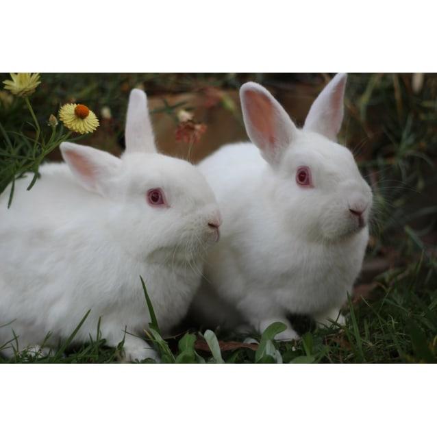 Photo of Bugsy & Bunnykins