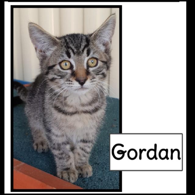Photo of Gordan