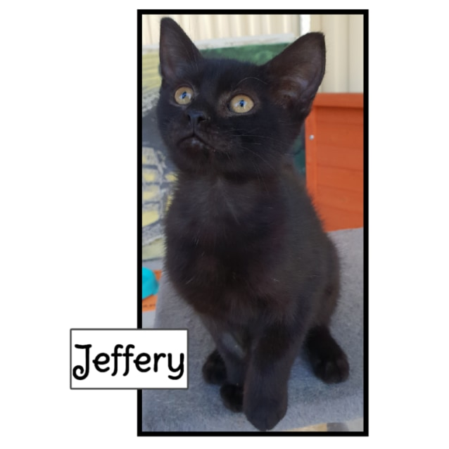 Photo of Jeffery