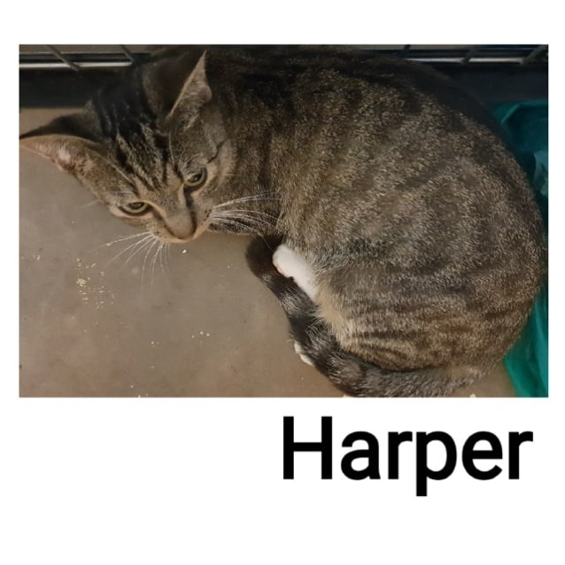 Photo of Harper