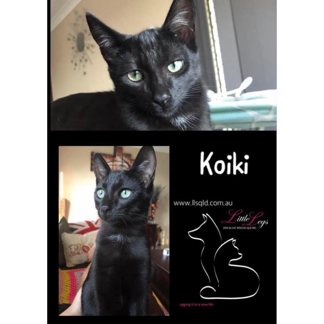 Photo of Koiki