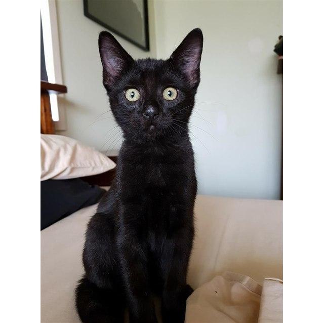 Photo of Kona
