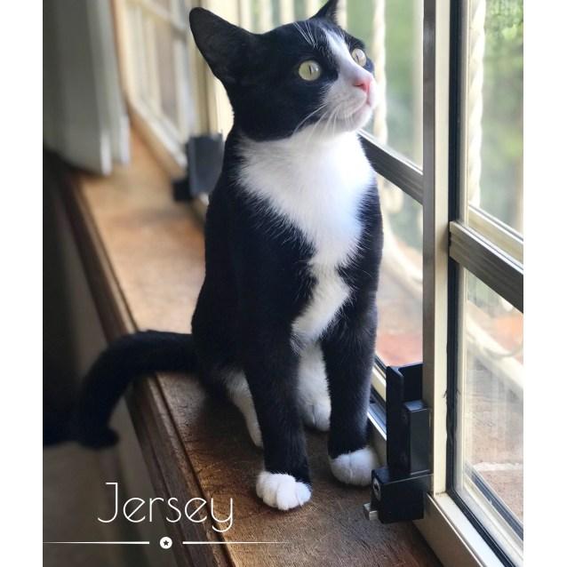 Photo of Jersey & Dakota