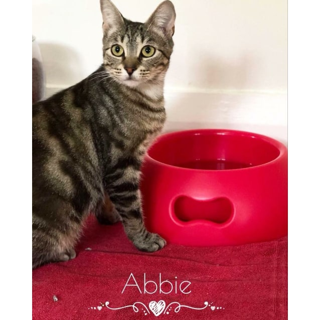 Photo of Abbie