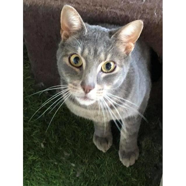 Photo of Poody Cat