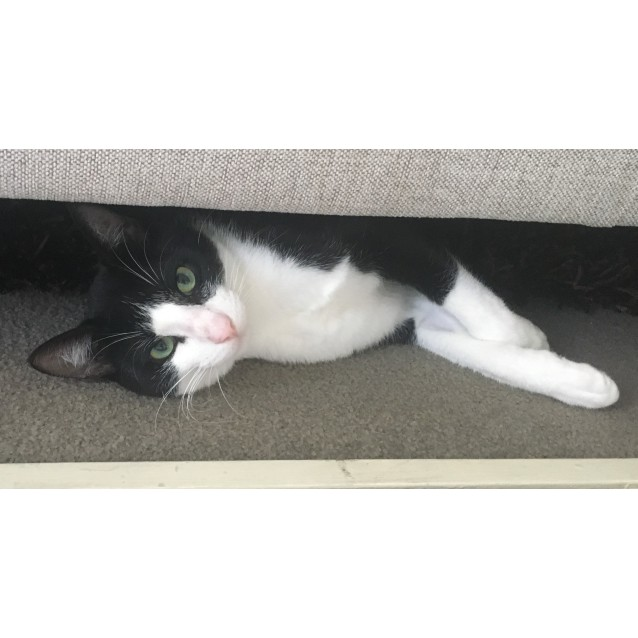 Photo of Harvey