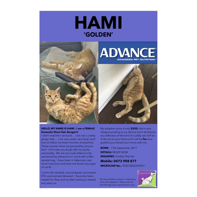 Photo of Hami (Golden)