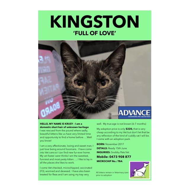 Photo of Kingston