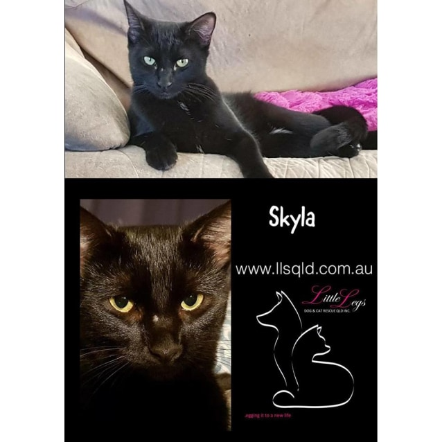 Photo of Skyla