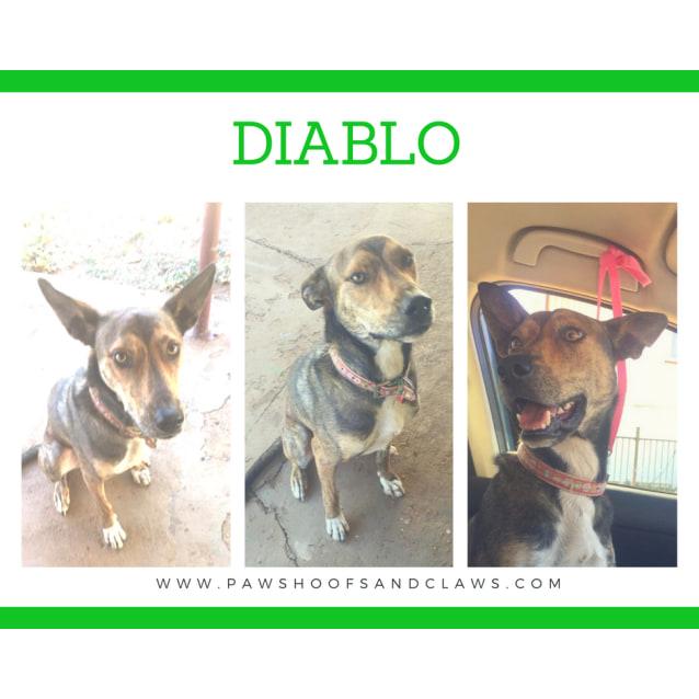 Photo of Diablo