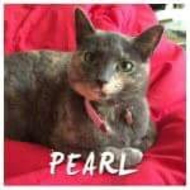 Photo of Pearl