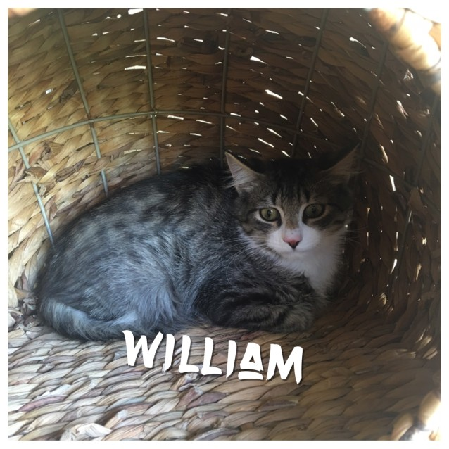 Photo of William