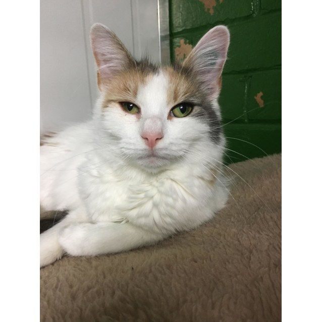 Photo of Molly Id42317