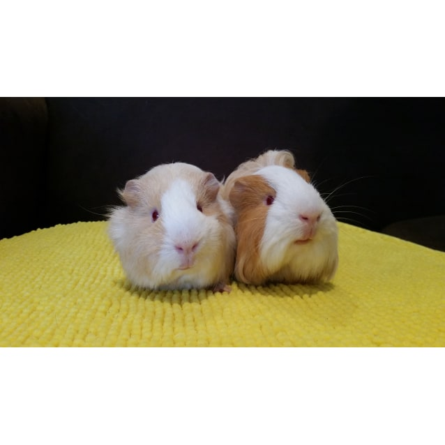 Photo of Bumble And Diaz