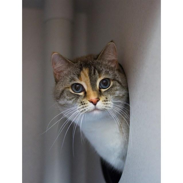 Photo of Mitsy