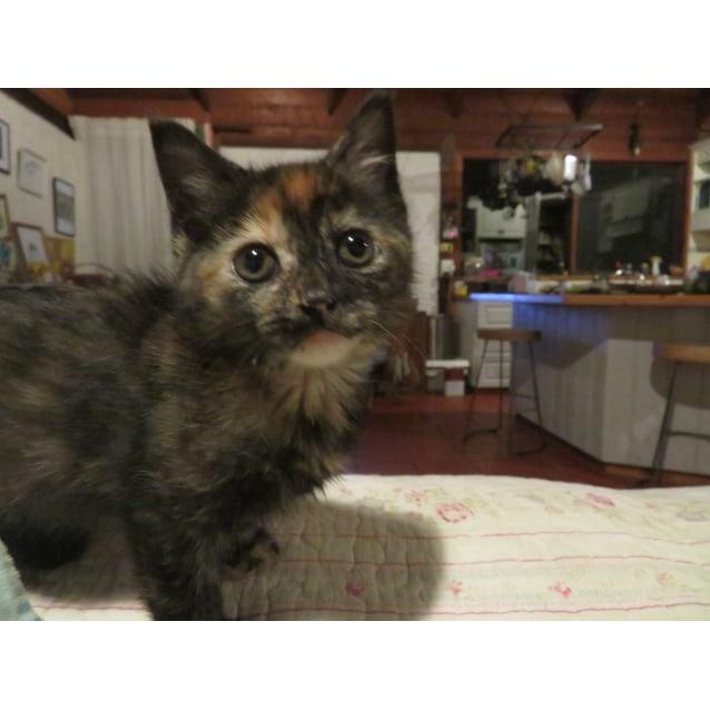 Photo of Sweet Pea