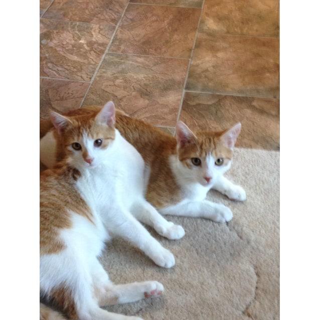 Photo of Merrick,Elliott&Merlin