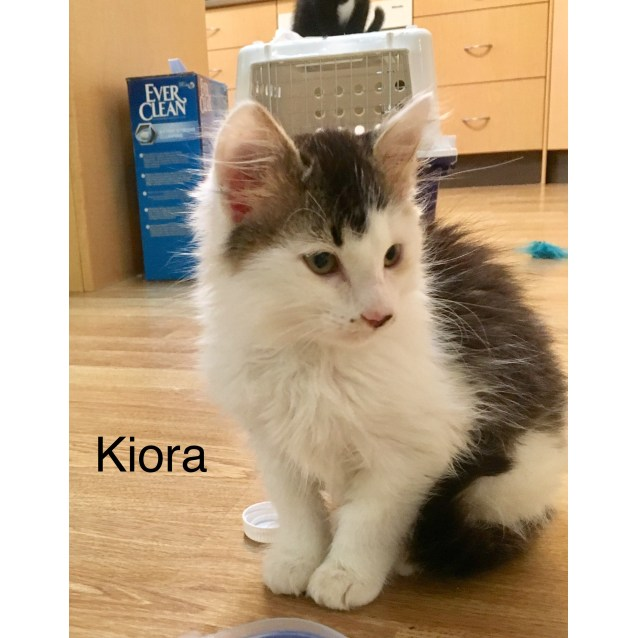 Photo of Kiora