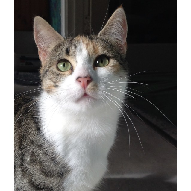 Photo of Twinkles (Assisted Rehome)