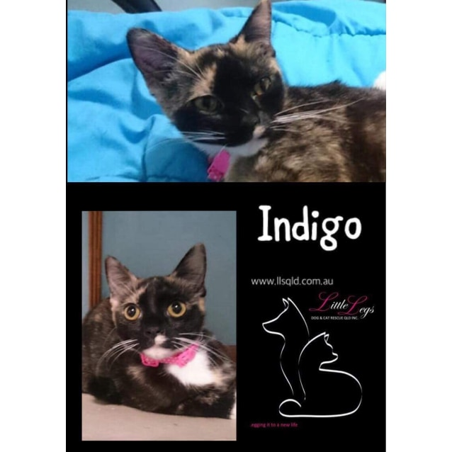 Photo of Indigo