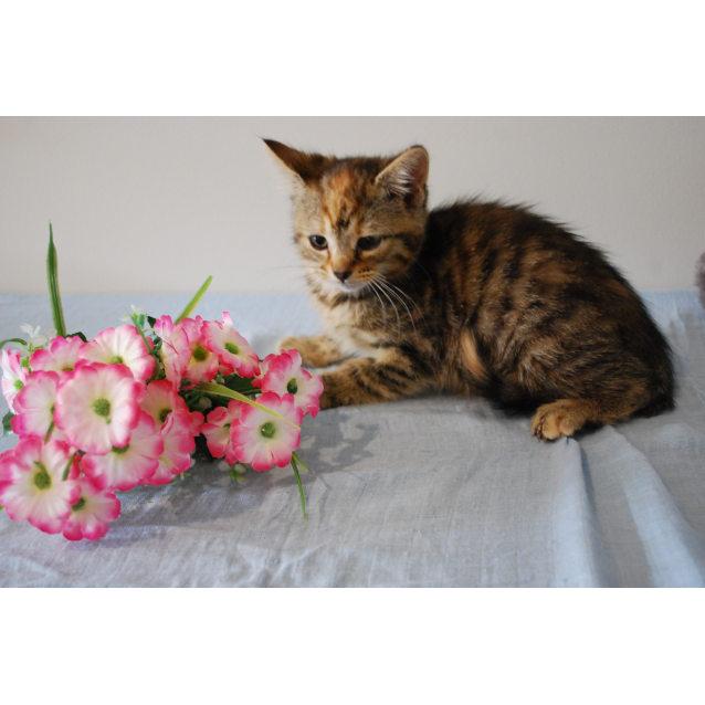 Photo of Esta ~Rainbow Cat Rescue~