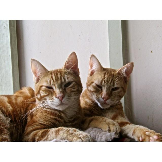 Photo of Huey , Dewey  And Louie.