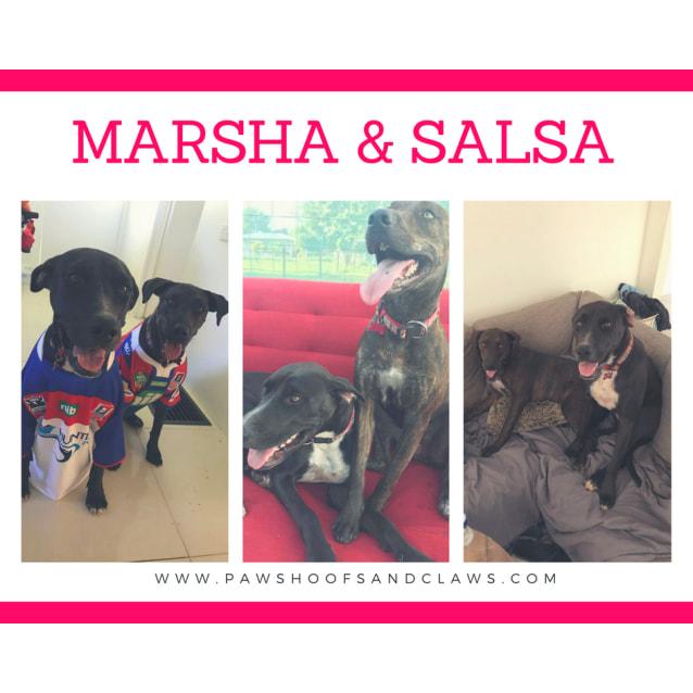 Photo of Salsa And Marsha