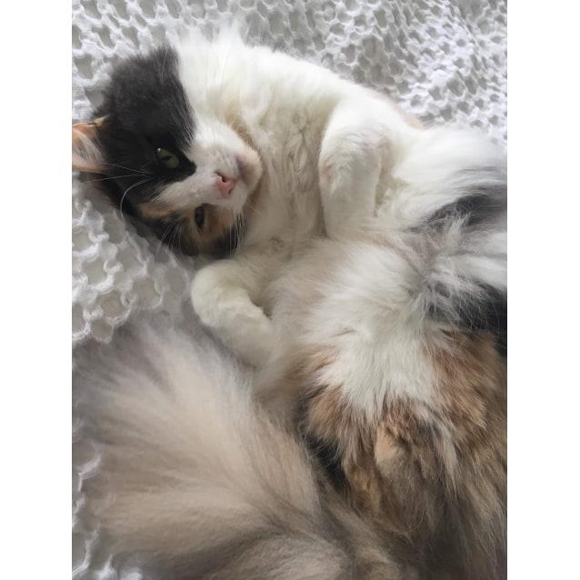 Photo of Gorgeous Gemima