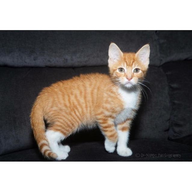 Photo of Ak2591   Ginger