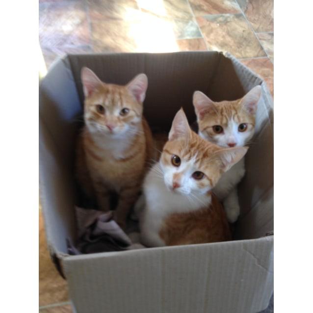 Photo of Harry,Merrick,Elliott&Merlin