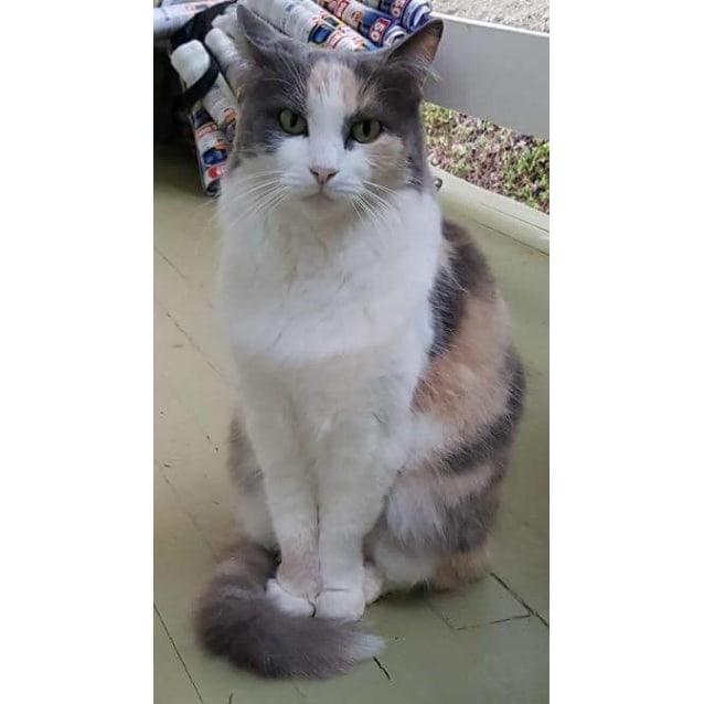 Photo of Minkie