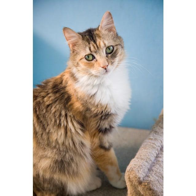 Photo of Nerina