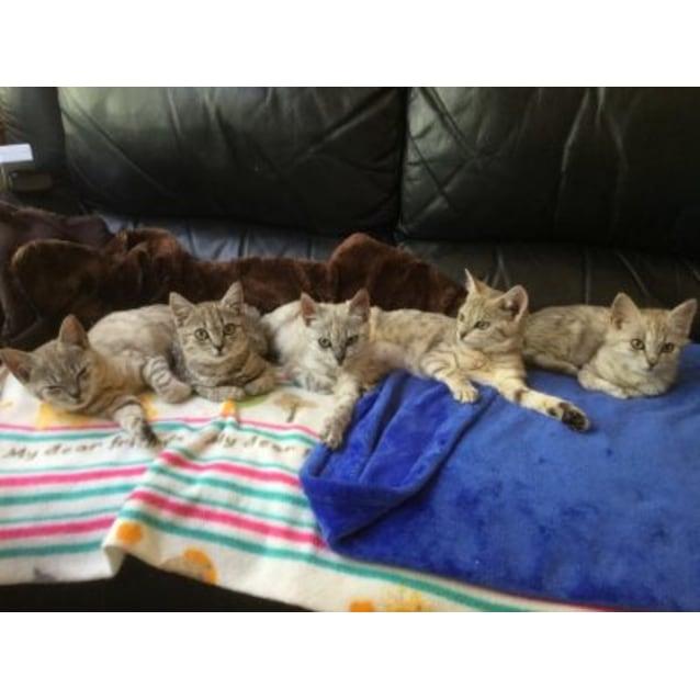 Photo of Sable, Vanilla, Tao, Sahara, Cuba, Latte & Juliett