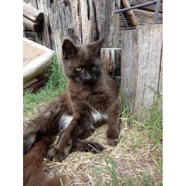Photo of Calypso