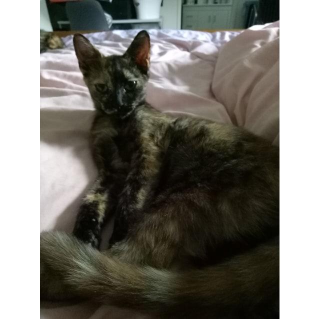 Photo of Iona