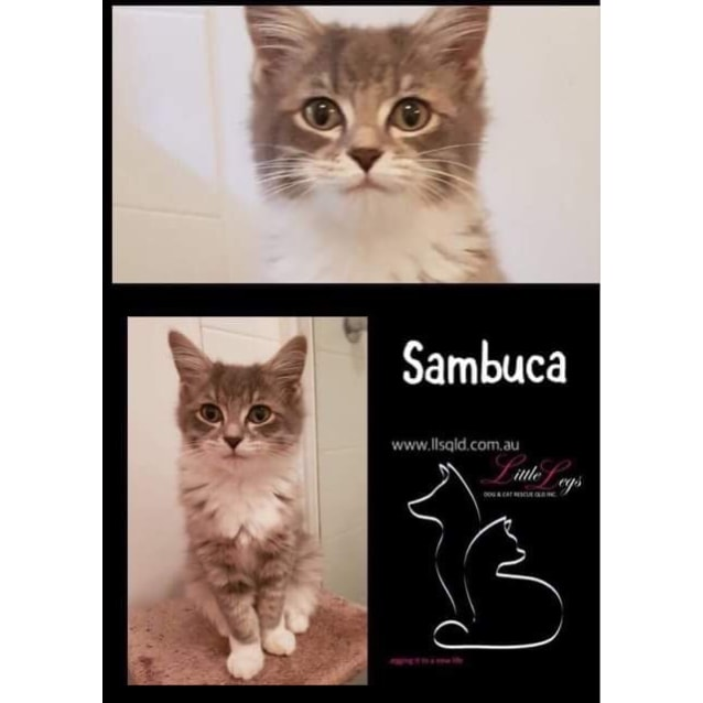 Photo of Sambuca