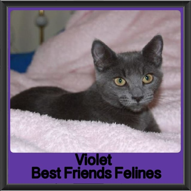 Photo of Violet