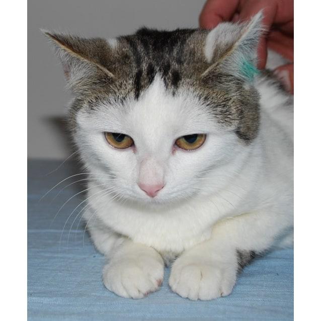 Photo of Nile ~Rainbow Cat Rescue~