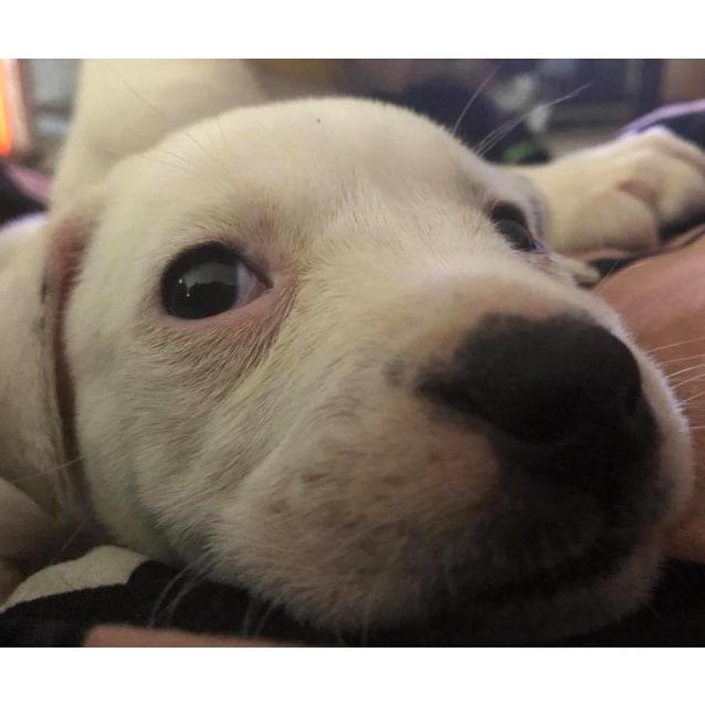 Photo of Puppy Halle Dl1920