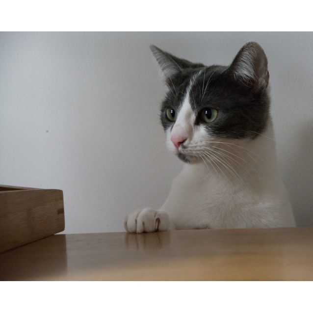 Photo of Ainsley Grey   Still Looking For A Home.