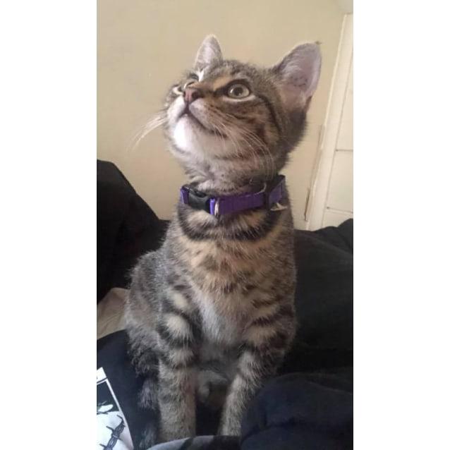 Photo of Pretzel The Tabby Terror Kitten!